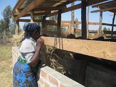 Mama Sabina Feeding the Ng'ombe