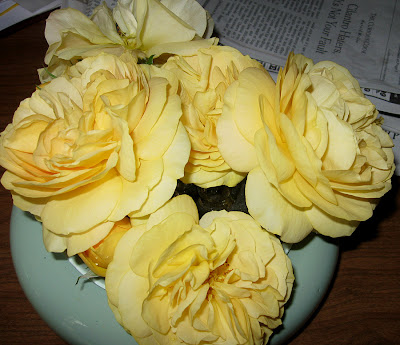 Annieinaustin, bowl of Julia Child Roses