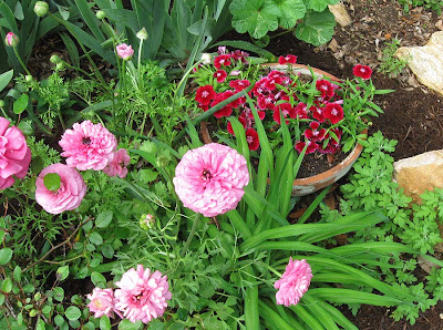 annieianaustin, ranunculus and dianthus