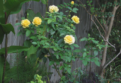 Annieinaustin, julia child rose