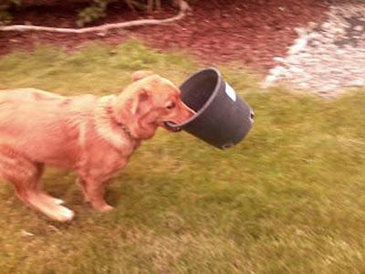 Annieinaustin, garden dog