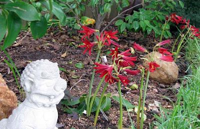 Annieinaustin, Foo dog with Oxblood lilies