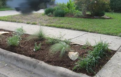 Annieinaustin, parkway planting