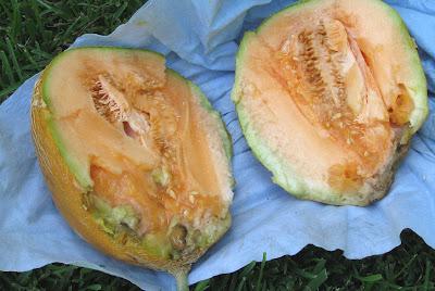 Annieinaustin, inside wrecked melon