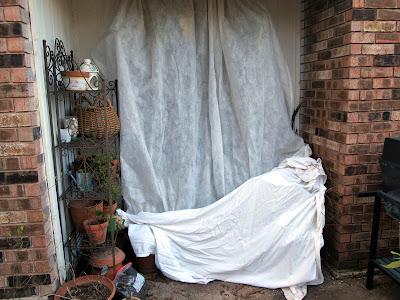 Annieinaustin,2011,02,tucked in plants