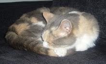 Vår katt