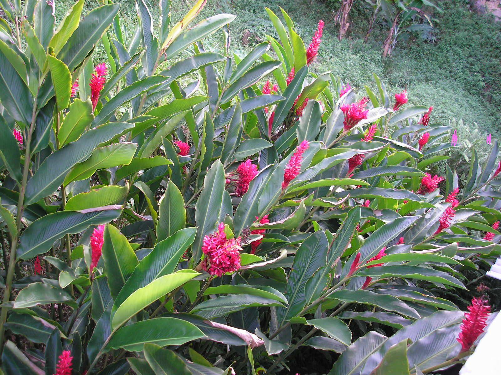 plantas de jardim lista:Alguém saberia o nome desta planta? Se souberem me informem