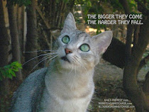 THE CAT WHO ATE CHASE BANK BOOK is coming, the blog is already here.