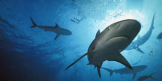 ikan-hiu-buta-warna
