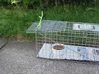 how to catch a stray dog without a trap