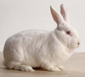 ปีนี้เป็น ปีกระต่ายทอง