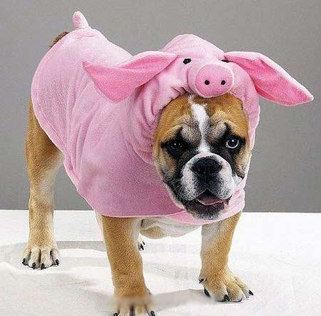 http://3.bp.blogspot.com/_L9NOf-r4F1E/S-mYied29fI/AAAAAAAABqM/AA79No7ojsM/s1600/Dog+clothes.jpg