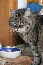 Minka - Du warst unsere erste Katze