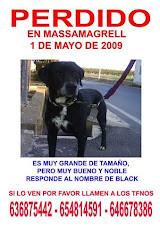 Black perdido en Massamagrell(Valencia)