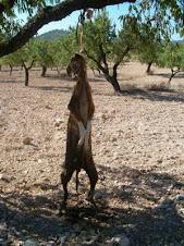 ¿Por qué las leyes de protección animal no son duras? Hasta cuando van a permitir que ocurra esto?