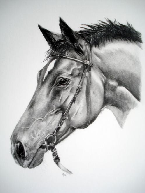 Mes amis les chevaux trakehner - Tchoupi et le cheval ...
