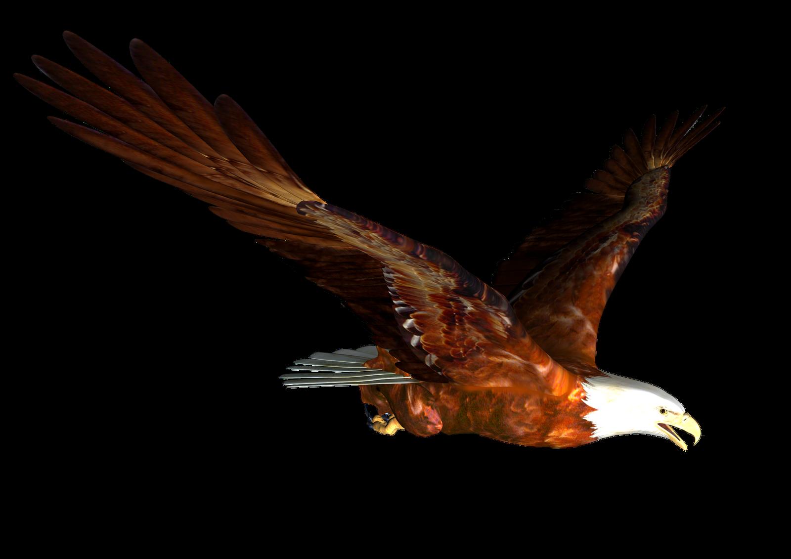 misc png eagle graphics etc