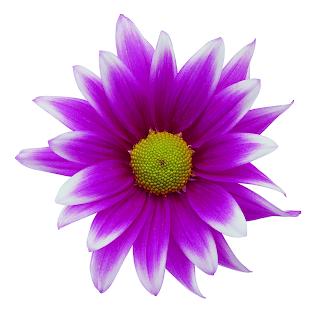 Sun Flower Spa Sioux City