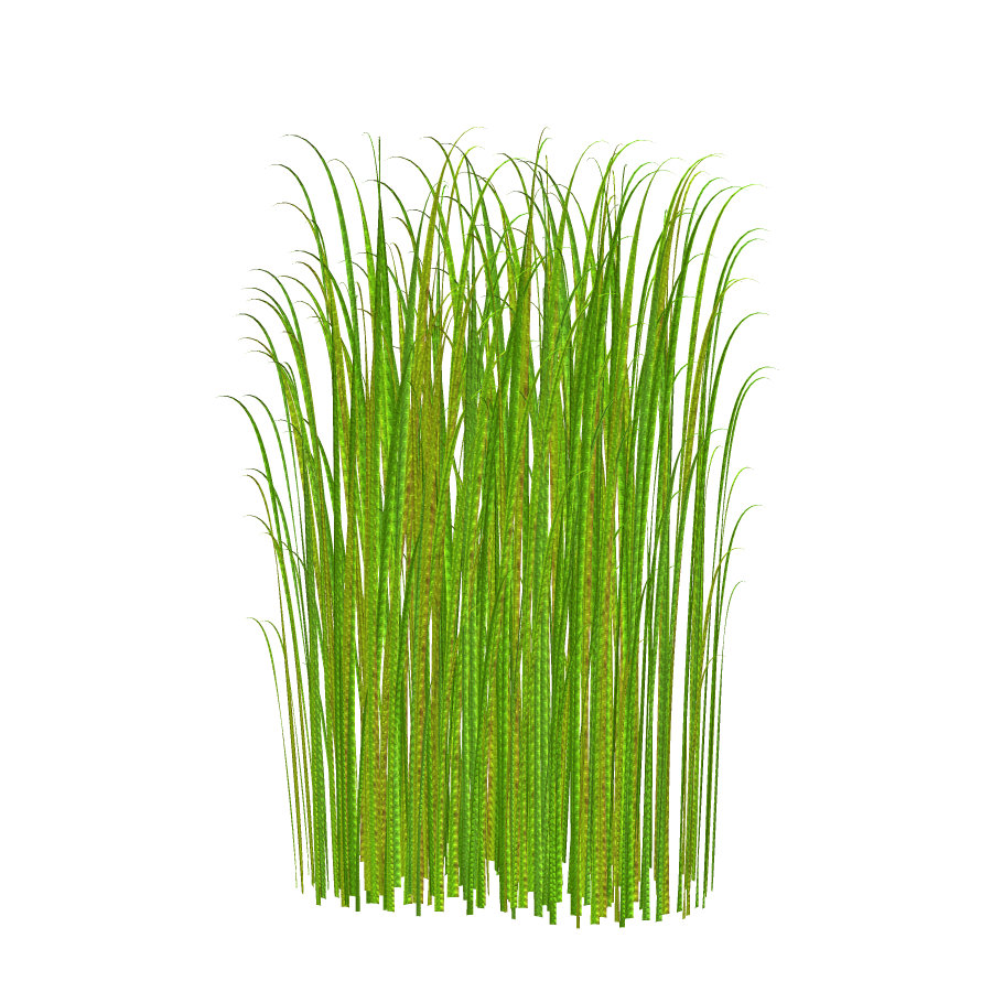 Grass Clip Art : Grass png