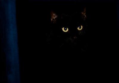 Tiki, the cool kittycat