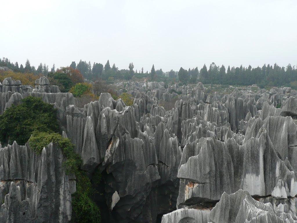 غابات الاحجار صور غابة الاحجار