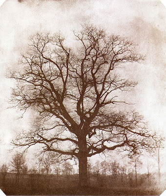 William Henry Fox Talbot, Tree