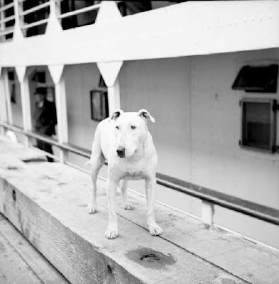 http://3.bp.blogspot.com/_LBRxNEgFXaM/SUVlhu99fOI/AAAAAAAAAQE/x-inW1zPC4U/s400/Patsy+Ann+Beside+Ship.jpg