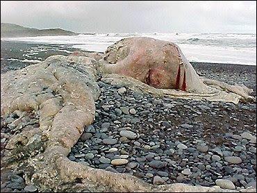 Hewan Laut Aneh di Chili « Wong168's Blog
