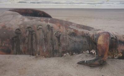 Wawasan: Foto Makhluk Aneh di Tepi Pantai