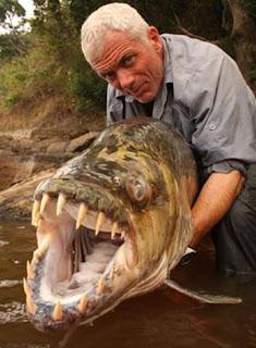 Ikan Piranha Raksasa Ditemukan