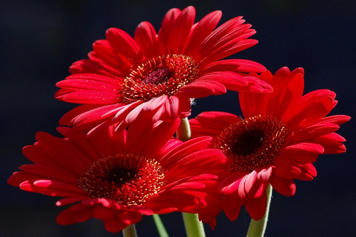 Red The Best Color Chosen for Flower graphy blog for everyone