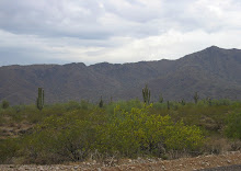 Explore the White Tank Mountains and Sonoran Desert