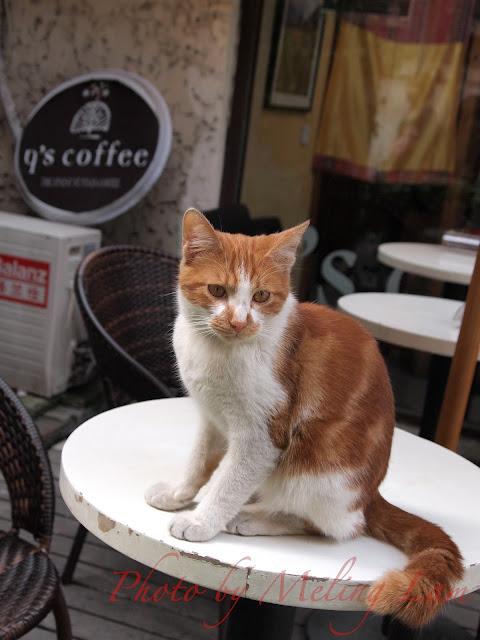 shanghai 田子坊 Cafe Dan 丹 咖啡