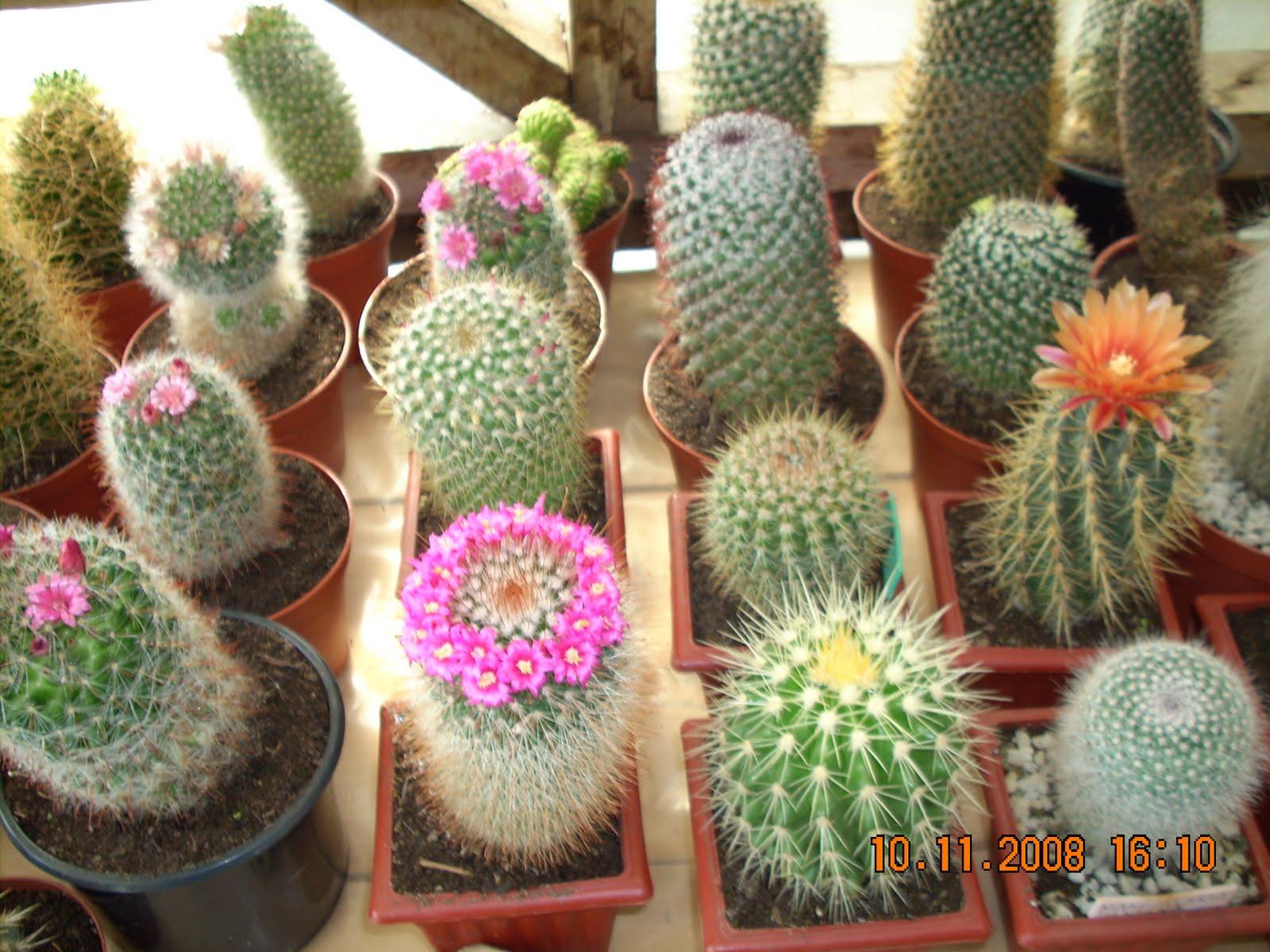 Centro cultural artenoble integrante de centro cultural for Fotos de cactus