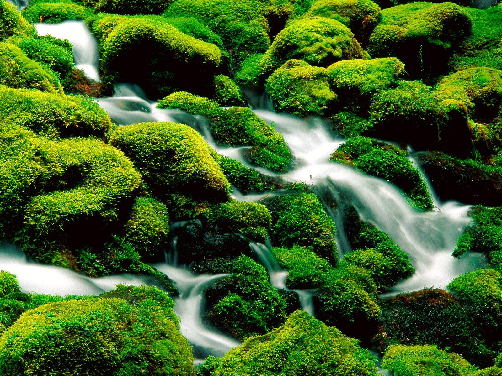 http://3.bp.blogspot.com/_LEaI0vplWIE/TUDTQOuZxkI/AAAAAAAACgg/Dn7e_PsP_cA/s1600/Rivers_and_Creeks_nature_wallpaper__6_.jpg