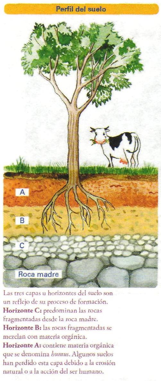 S ptimo b sico segundo semestre el suelo for Proceso de formacion del suelo