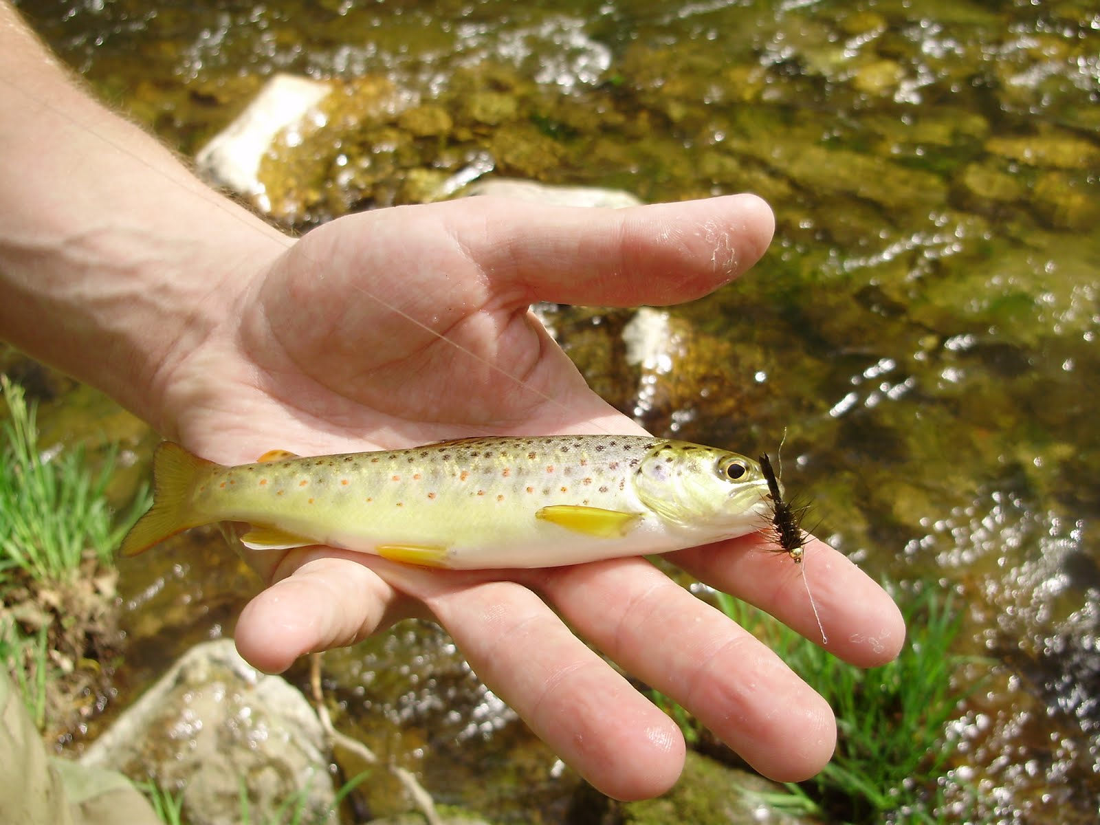 The slippery trout a fly fishing blog fly fishing for for Trout fishing nj