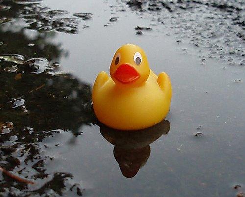[duck]