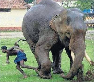 elephant-attack-kerala-05.jpg
