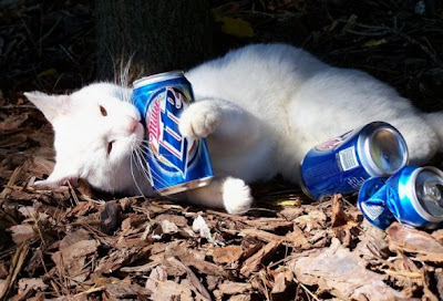 cat drink beer