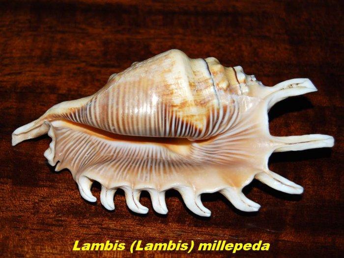sea-shells-17.jpg