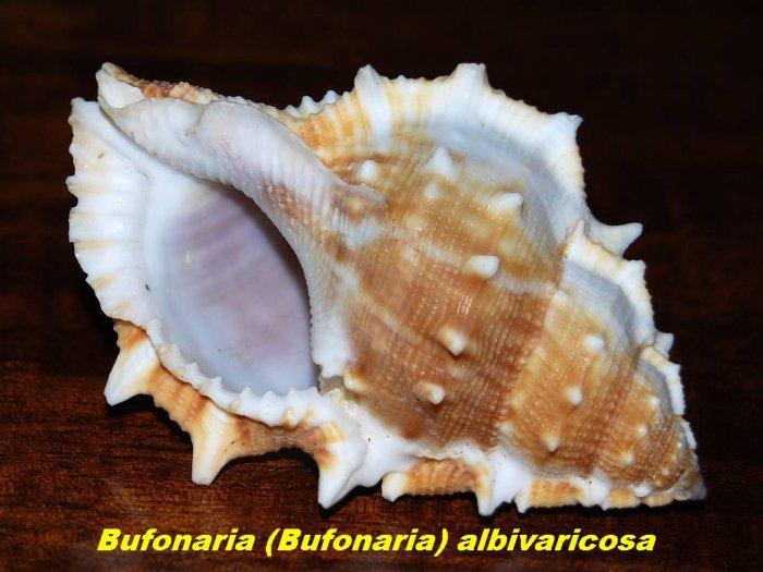 sea-shells-01.jpg