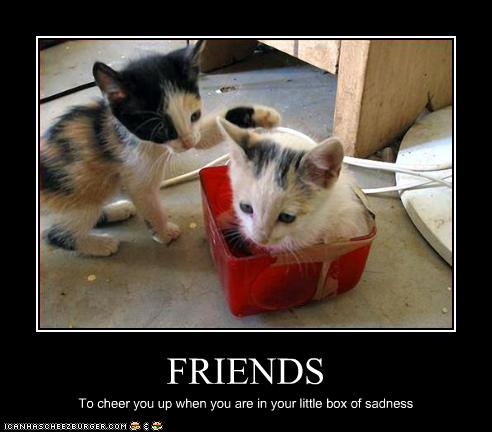 lol cats friend