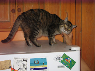 Cairo on the fridge