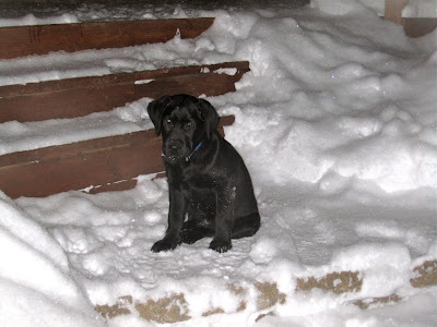 Romero, a thirteen week old black lab puppy, sits on a snow-covered stone step in a backyard. Behind him are three wooden steps leading up to a deck. The steps and a thin pathway in front of Romero have been recently shovelled, but are still coated in an inch or two of fluffy white snow. To each side of Romero are large piles of fresh snow that are quite a bit taller than Romero himself.