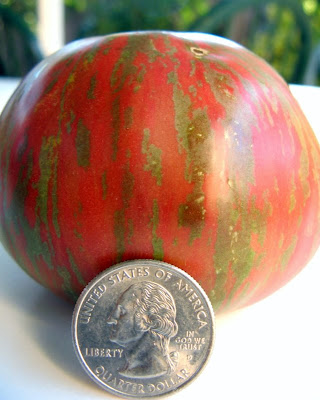wild boar farms unnamed striped tomato