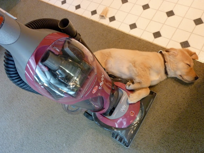 Sully and the vacuum