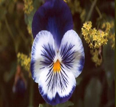 [Flores+-+04.JPG]
