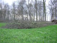 abgebrochener Baum am Obersee