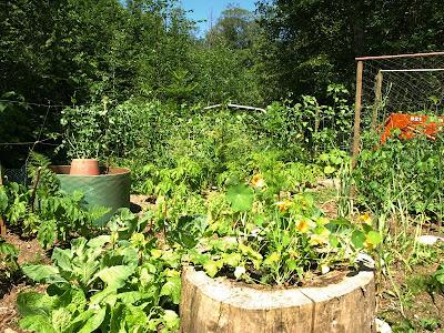 garden 7/21/10
